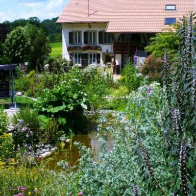 Vue ouest, biotope