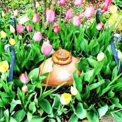 Pieuvre à Tulipes