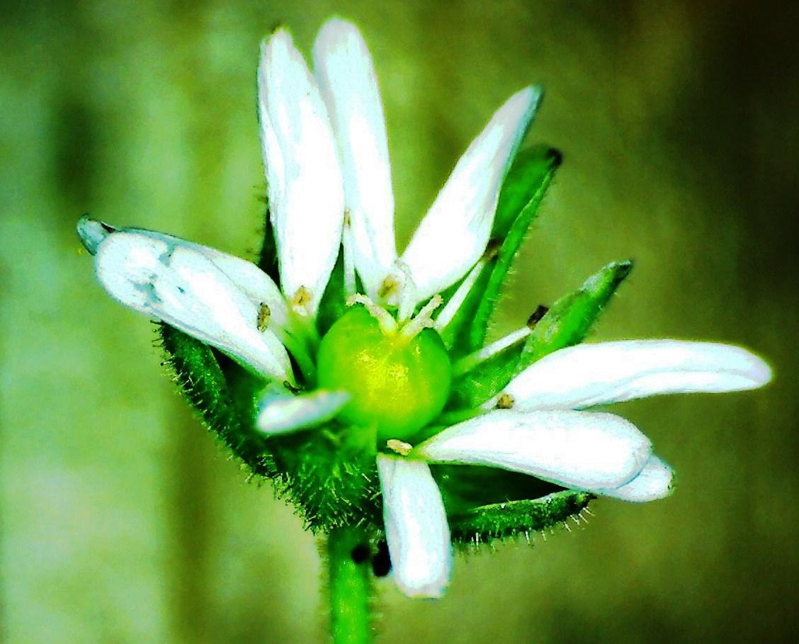Fleur x