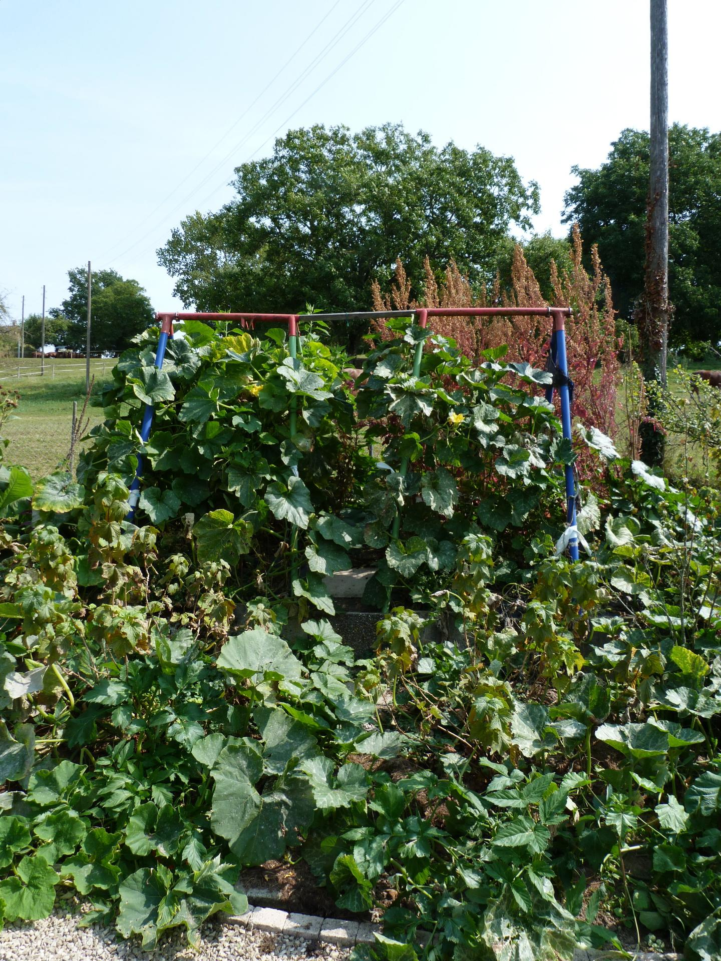 Jardinles especes courgesetcassis 31