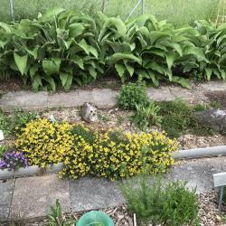 Jardinles especes grandeaunee 2