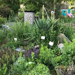 Jardinles especes plantesrocaille