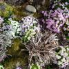 Jardinles especes primeveres 32