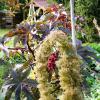 Jardinles especes ricin 7