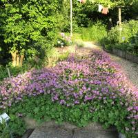 Jardinvuesgenerales 18