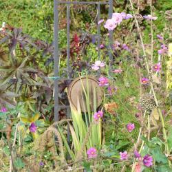 Jardinvuesgenerales 4