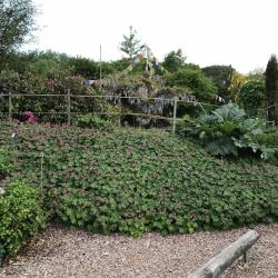 Jardinvuesgenerales 9