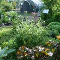 Jardinvuesgenerales1 44