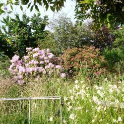 Jardinvuesgenerales1 48
