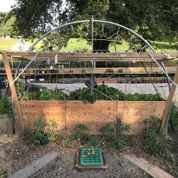 Jardinvuesgeneralesbacstomatesetgrimpantes 26
