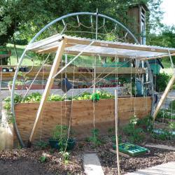 Jardinvuesgeneralesbacstomatesetgrimpantes 45