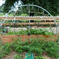 Jardinvuesgeneralesbacstomatesetgrimpantes 46