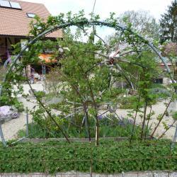 Jardinvuesgeneralesmuriertoilearaignee 19